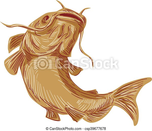 catfish mud cat going up drawing drawing sketch styleillustration