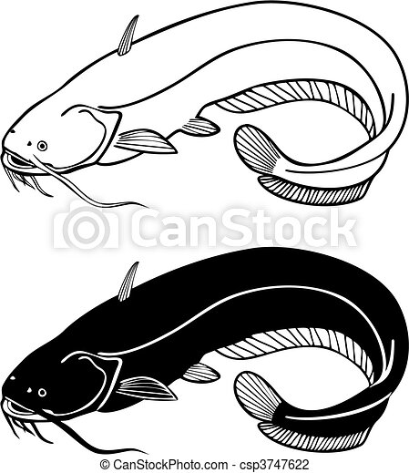 Catfish, vector illustration  - csp3747622