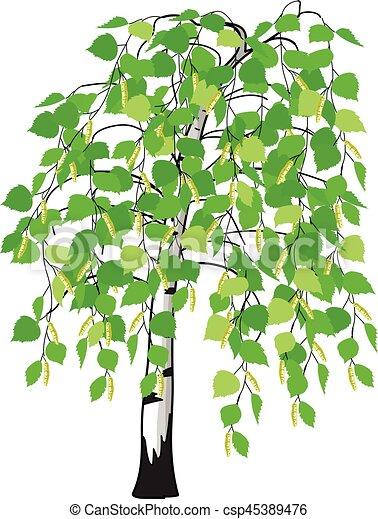 catkins  baum  birke hintergrund   catkins  baum  wei u00dfe vektoren illustration suche palm tree images clip art christmas tree images clip art