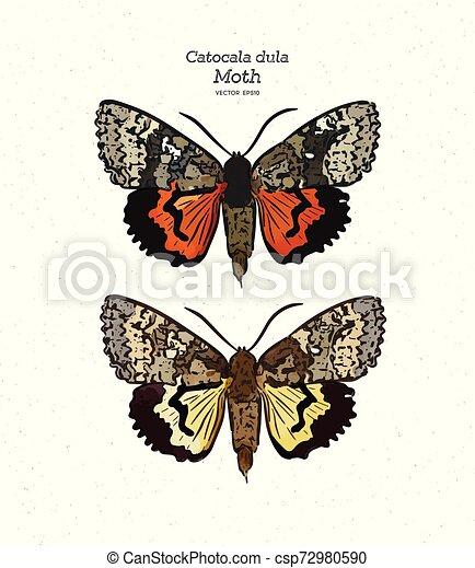 catocala, gezin, moth, trekken, hand, dula, vector., erebidae., schets - csp72980590