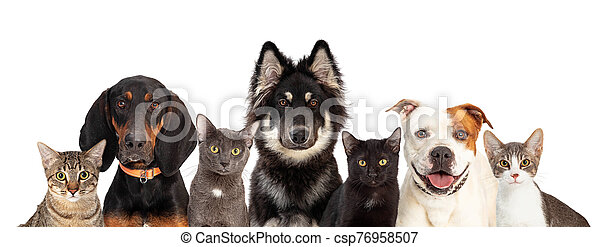 Cats And Dogs Together White Web Banner Row Of Cats And Large Dogs Close Together Looking At Camera On White Web Banner With