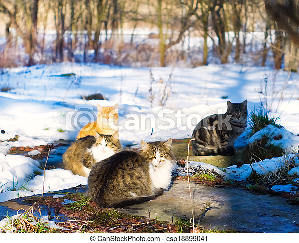 Cats basking on the sun in winter - csp18899041