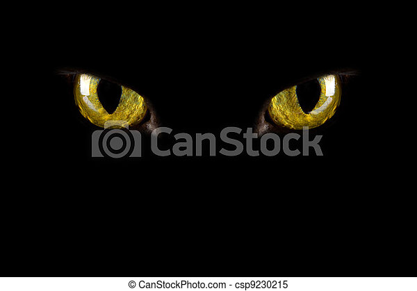 cat's eyes glowing in the dark. halloween background - csp9230215