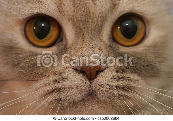 Cat's face - csp0002684