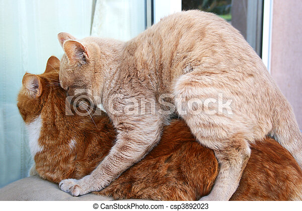 Cats In Love Red And Tawny Cats In Love
