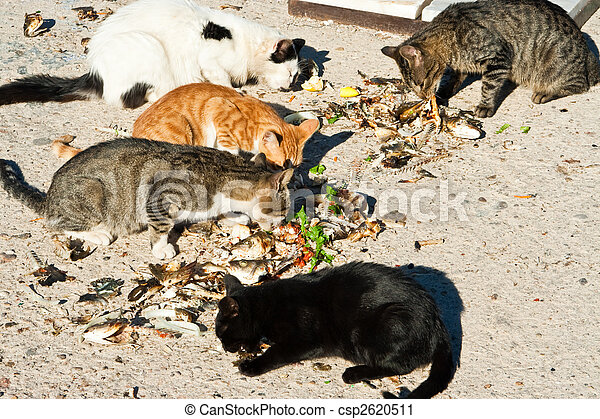 cats - csp2620511