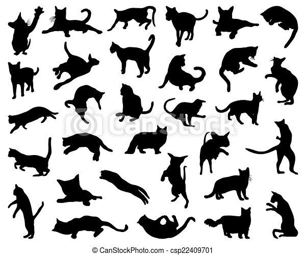 cats - csp22409701