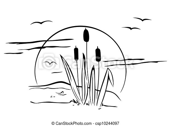 Cattails on illustration - csp10244097