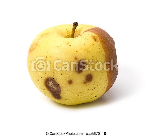 cattiva mela, isolato, marcio - csp5670118