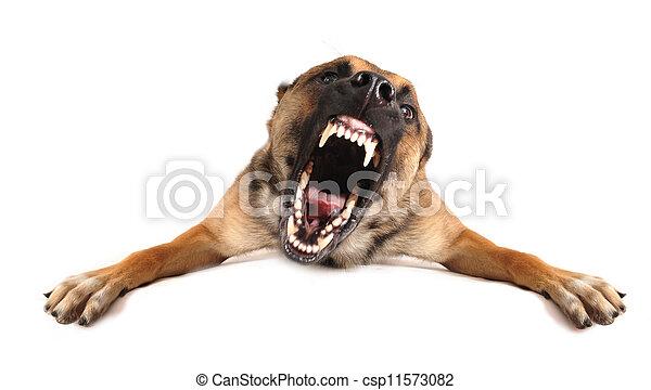 cattivo cane - csp11573082