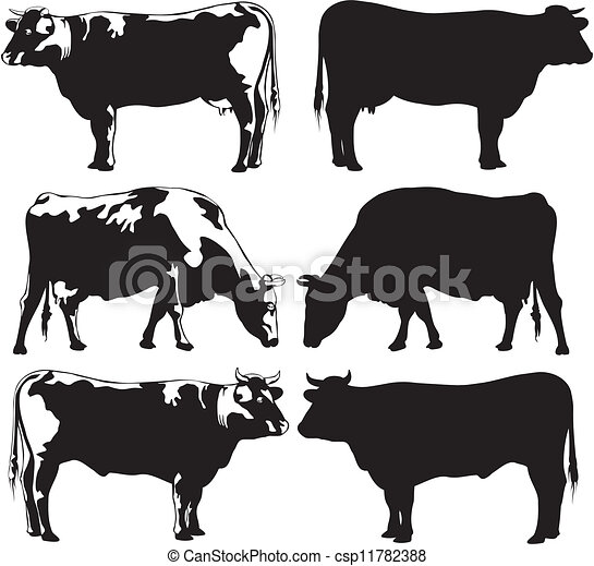 cattle - cow and bull - csp11782388