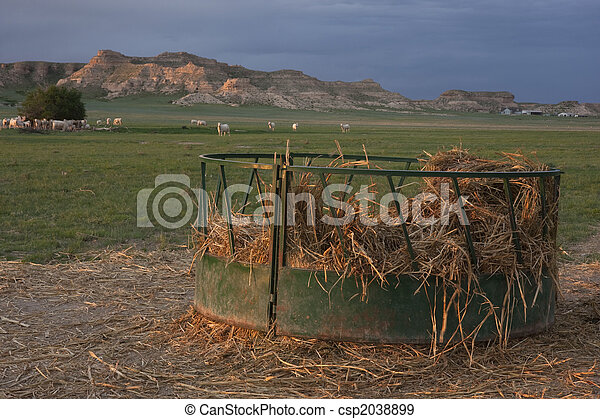 Cattle feeder with corn straw in pasture round metal cattle cattle feeder with corn straw in pasture stock photo sciox Choice Image
