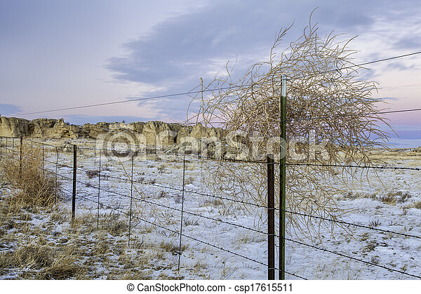 cattle fence and tumbleweed - csp17615511