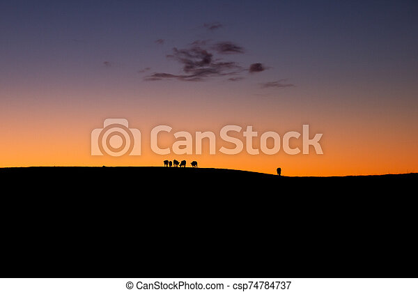 Cattle Silhouette In Sunset - csp74784737