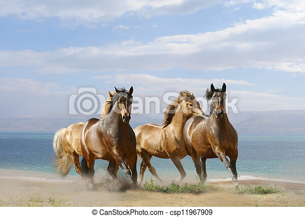 cavalli, corsa - csp11967909