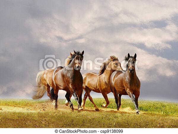 cavalli, corsa - csp9138099