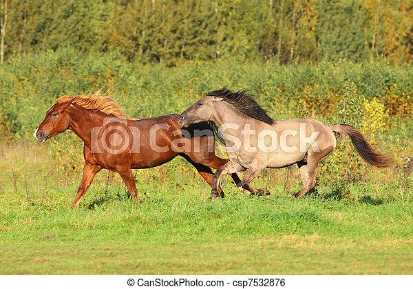 cavalli, corsa - csp7532876