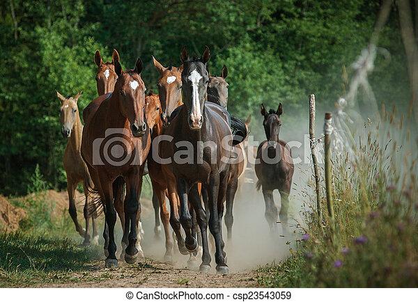 cavalli, gregge - csp23543059