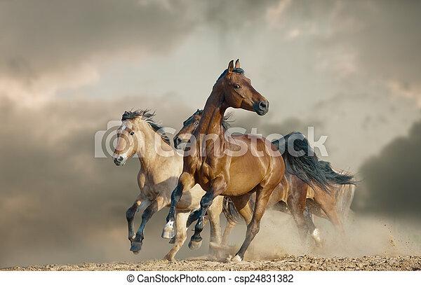 cavalli, selvatico, corsa - csp24831382