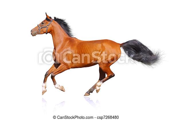 cavallo, isolato - csp7268480