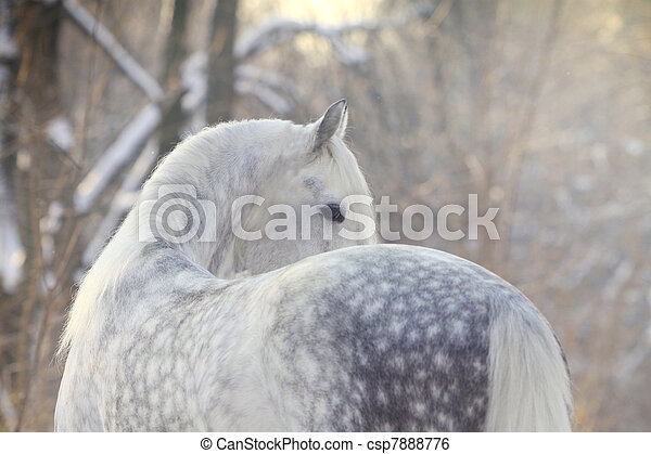 cavalo, inverno - csp7888776