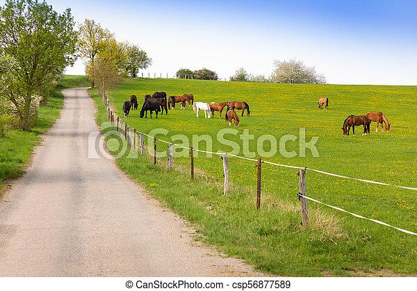 cavalos, comer, fazenda, primavera, grama campo - csp56877589
