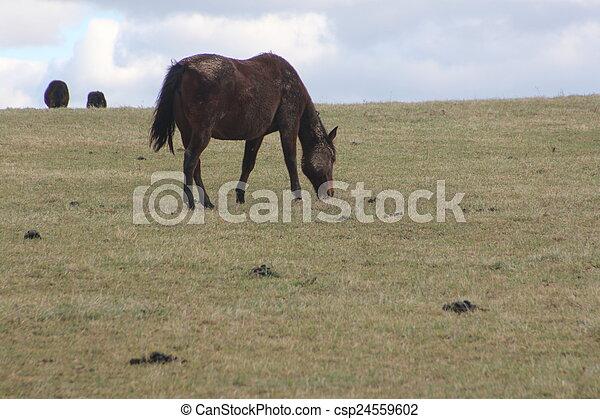 cavalos, montanhoso, prado, pastar - csp24559602