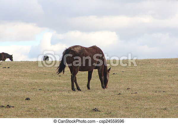 cavalos, montanhoso, prado, pastar - csp24559596