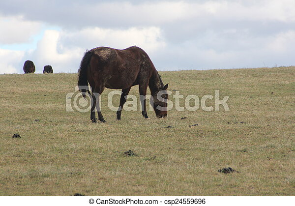 cavalos, montanhoso, prado, pastar - csp24559696