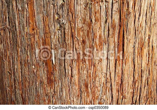 Cedar Bark - csp0350089