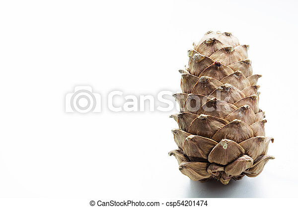 Cedar cone isolated on white. Close up. Copy space. - csp54201474