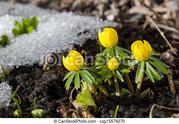 cedo, flores, jardim - csp15579270