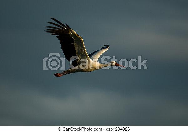 escuro cegonha voando nuvens experiência