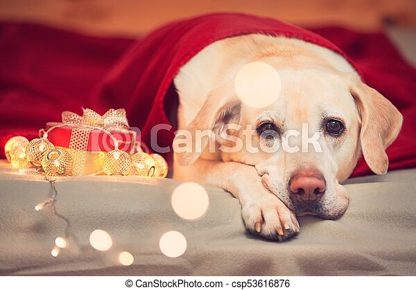 Celebrations with cute dog - csp53616876