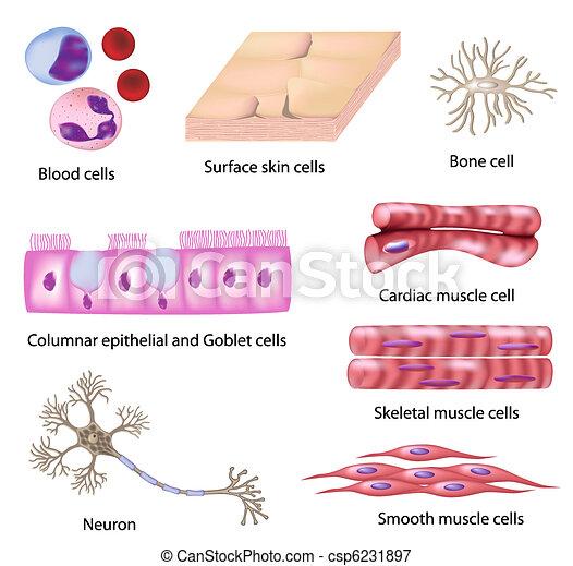cell, mänsklig, kollektion - csp6231897