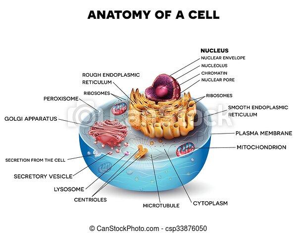 cell, struktur - csp33876050