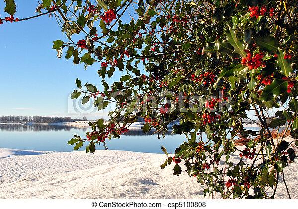 cena, wintery - csp5100808
