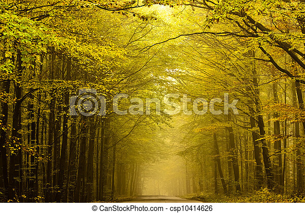 Centered mysterious road in autumn forest. - csp10414626