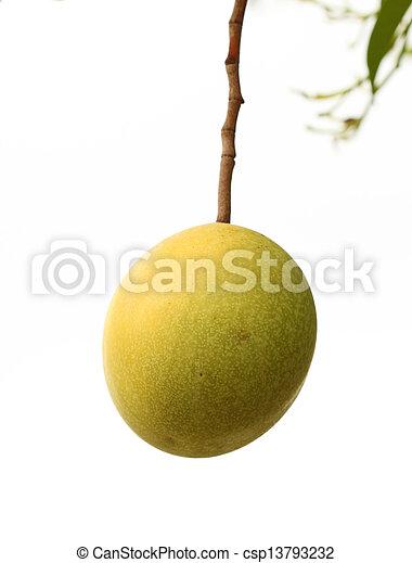 Cerbera oddloam fruit on tree - csp13793232