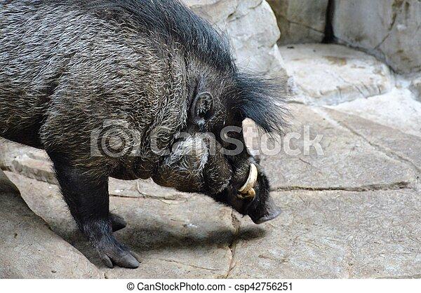 Cerdo - csp42756251
