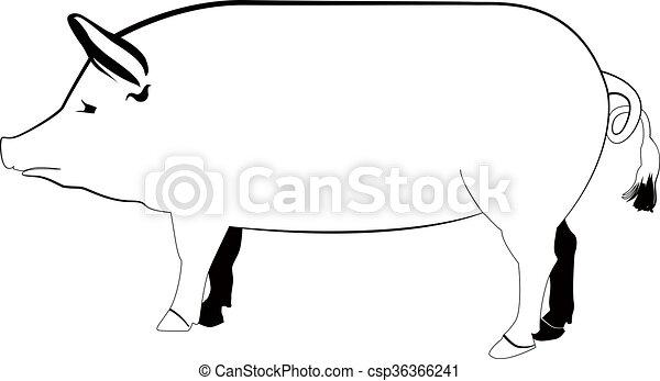 Cerdo - csp36366241