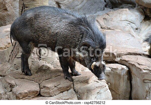 Cerdo - csp42756212