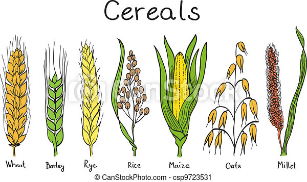 Cereals hand-drawn illustration - csp9723531