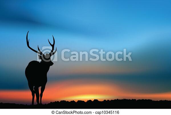 cerf, coucher soleil - csp10345116