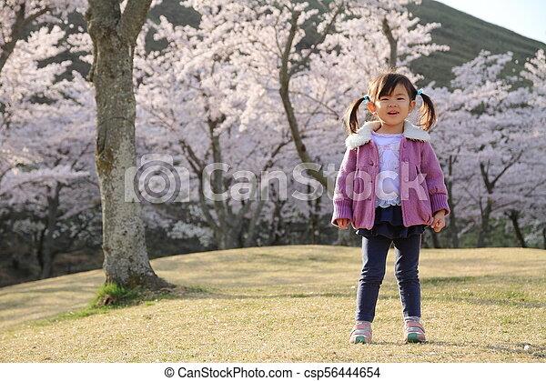 cerise, japonaise, années, fleurs, (3, old), girl - csp56444654