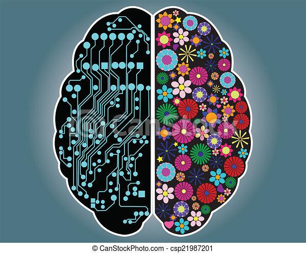 cerveau, droit, côté, gauche - csp21987201