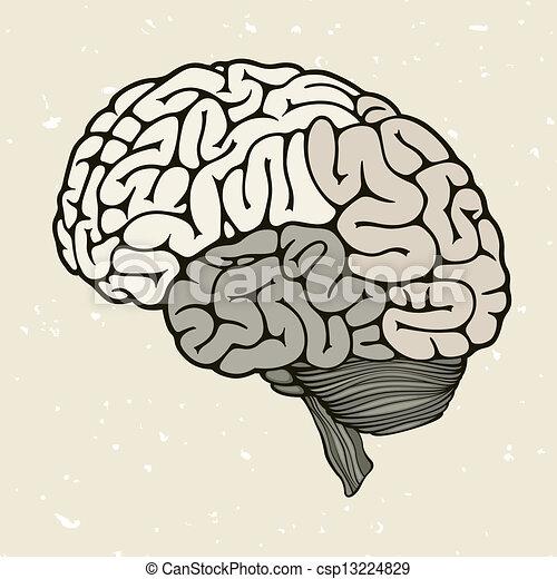 cerveau, goutte, sanguine, humain - csp13224829