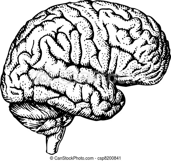 cerveau, humain - csp8200841