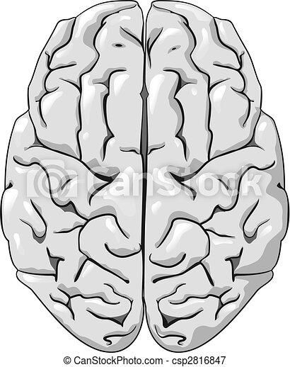 cerveau, humain - csp2816847