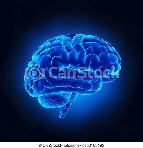 cerveau humain, rayon x, vue - csp8185192